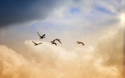 """Středa 17.6. od 18 h Meditace a ladění slovem, vůní a zvukem """"Svoboda"""""""
