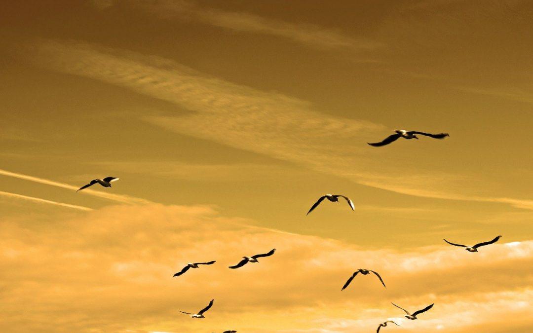 """St 11.11. od 18:30 – 19:30 ONLINE Meditace a ladění slovem, vůní a zvukem """"Odevzdání a díkůvzdání"""""""